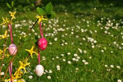 Easter eggs on branchlet in garden. Easter eggs on branchlet with garden in background Royalty Free Stock Image
