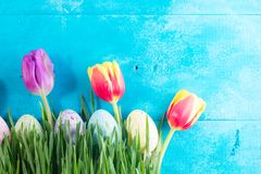 Easter eggs on bright blue background. Row of Easter eggs in grass on bright blue background with tulips Royalty Free Stock Images