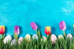 Easter eggs on bright blue background. Row of Easter eggs in fresh grass on bright blue background with tulips Stock Images