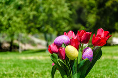 Easter eggs and bright red tulips on the grass background Stock Image