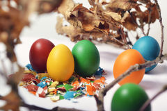 Easter Eggs on Broken shells. Home made organic Easter eggs on broken shells surrounded by brown leafs Royalty Free Stock Image