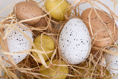 Easter eggs. With brown grass Royalty Free Stock Images