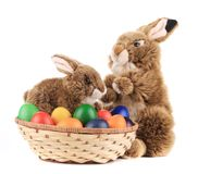 Easter eggs and bunnies. Royalty Free Stock Photography