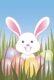 Easter eggs and bunny in grass. Easter bunny peaking from behind Easter eggs and green grass with a gradient blue sky in the background Royalty Free Stock Photography