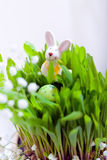 Easter eggs and bunny. On a white backgroud Stock Photography