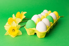 Easter eggs in carton with narcissus flowers. Closeup shot of Easter eggs in yellow carton and yellow daffodil flowers or narcissus on green background Stock Photos