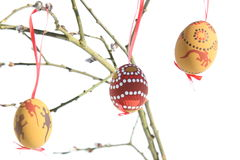 Easter eggs on catkin Royalty Free Stock Photos