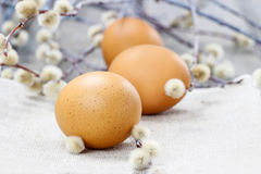 Easter eggs and catkins Royalty Free Stock Photos