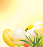 Easter eggs, chamomile with ladybird and bee Stock Image