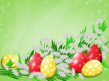 Easter eggs and chamomiles. stock image
