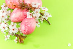 Easter eggs and cherry blossom flowers Stock Images