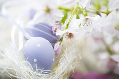 Easter Eggs and Cherry Blossoms Stock Image