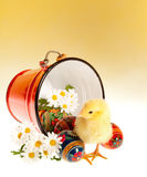 Easter eggs and chick Royalty Free Stock Image