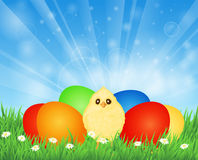 Easter eggs and chicken Royalty Free Stock Image