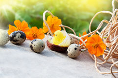 Easter eggs, chicken and flowers Stock Image