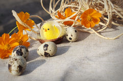 Easter eggs, chicken and flowers Stock Photo