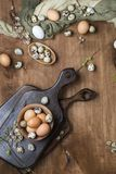 Easter eggs in chicken and quail. With willow twigs on wooden background, top view Stock Image