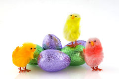 Easter eggs and chickens Royalty Free Stock Photo