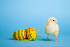 Easter eggs and chickens on blue Royalty Free Stock Photo
