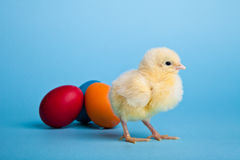 Easter eggs and chickens on blue Royalty Free Stock Image
