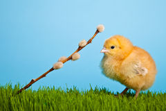 Easter eggs and chickens on green grass and blue Stock Images
