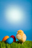 Easter eggs and chickens on green grass and blue stock image
