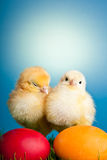 Easter eggs and chickens on green grass and blue Stock Photos