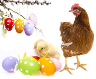 Easter eggs and chickens Royalty Free Stock Photos