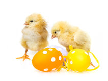 Easter eggs and chickens Stock Image