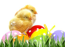easter eggs and chickens Stock Photos