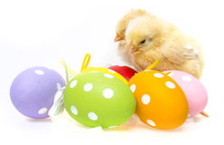Easter eggs and chickens Stock Images