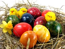 Easter eggs & chicks Stock Images
