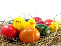 Easter eggs & chicks Royalty Free Stock Photos