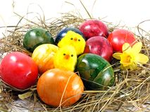 Easter eggs & chicks Royalty Free Stock Images