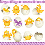 Easter eggs chicks Stock Photo
