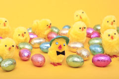 Easter eggs and chicks. Over yellow background Royalty Free Stock Images