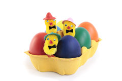 Easter eggs and chicks in carton over white Royalty Free Stock Image