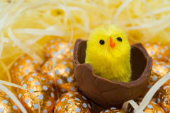 Easter Eggs and Chicks Stock Image