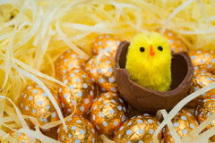 Easter Eggs and Chicks Royalty Free Stock Photos