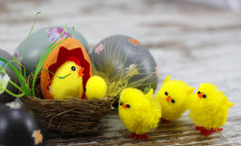 Easter eggs and chicks Royalty Free Stock Photography