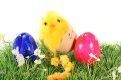 Easter eggs and chicks on a meadow Royalty Free Stock Photography