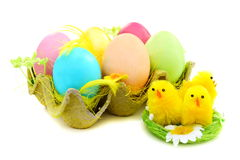 Easter eggs and chicks in nest. Royalty Free Stock Images