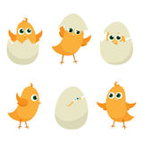 Easter eggs chicks Royalty Free Stock Photo