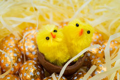 Easter Eggs and Chicks Royalty Free Stock Image