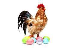 Easter eggs and Stock Image
