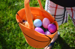 Easter Eggs. Color easter eggs being hunted by little youngster Stock Image
