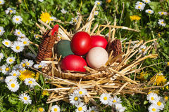 Easter eggs. Colored easter egg in woven basket Royalty Free Stock Photography