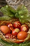 Easter eggs colored with onion peel. In the basket with green bow Royalty Free Stock Image