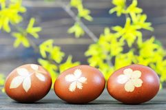 Easter eggs colored with onion. Easter eggs and yellow spring flowers. Easter eggs colored with onion peel. Easter eggs and yellow spring flowers stock photography