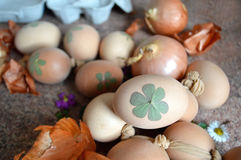 Easter eggs coloring with onion. And decorating with leaves Royalty Free Stock Photography